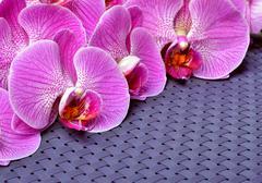 Purple orchid flower. Stock Photos
