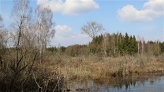Spring landscape of a bog, panorama Stock Footage