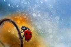Ladybug on beautiful background as magic Stock Photos
