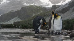 Penguin walks in the snow Stock Footage