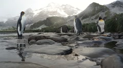 Penguin stetches next to icy stream near glacier Stock Footage
