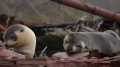 Fur seals on ship wreck in South Georgia Island Stock Footage