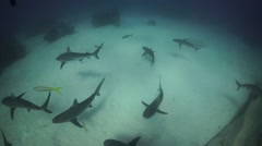 Schooling sharks super wide angle - stock footage
