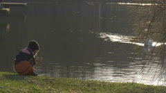 Swan Approaches to a Kid That Plays on Lake Bank Looking For Food Swan Stock Footage