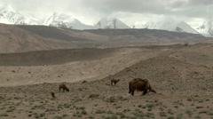 Xinjiang, mountains, herders, China (2ex).mp4 - stock footage