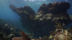 Bermuda reef - soft and hard corals and rocky structure Stock Footage