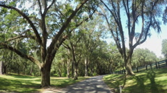 Big beautiful live oak avenue with spanish moss in summer Stock Footage