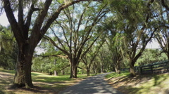 Big beautiful live oak avenue with spanish moss in summer - stock footage
