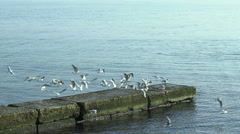Seagulls on the Pier. Slow motion Stock Footage