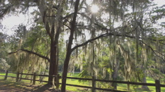 Sun shining through live oak tree canopy with spanish moss - stock footage