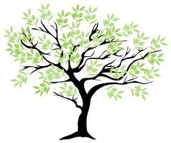 Olive Tree Stock Illustration