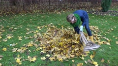 woman stuffing dry leaves into sack, autumn garden. - stock footage