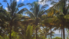 Wind Shakes Large Palms in City Park against Blue Sky Azure Sea Stock Footage