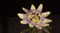 Passionfruit Flower Time-lapse Stock Footage