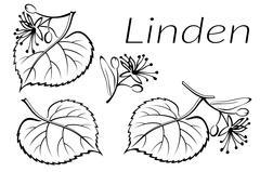 Linden Leaves Pictogram Set Stock Illustration