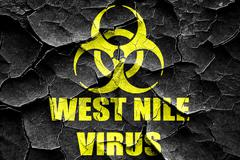 Grunge cracked West nile virus concept background - stock illustration