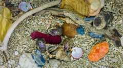 Set of Hermit Crabs from Philippines. - stock footage
