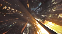4K Mystic Fantasy Woods Lightrays Camera Spinning Low Angle - stock footage