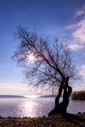 Beautiful sunset with tree - stock photo