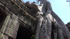 Entwined trees with stones at ta prohm temple Stock Footage