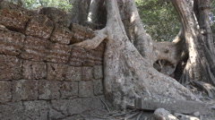 Entwined trees with stones at angkor wat temple complex Stock Footage