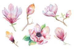 Painting Magnolia flower wallpaper. Hand drawn Watercolor floral - stock photo