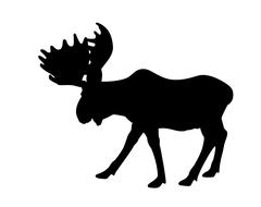 Silhouette adult moose Stock Illustration