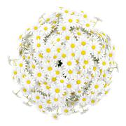 top view of daisies in vase isolated on white background - stock illustration
