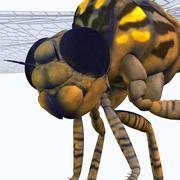 Meganeura Dragonfly Head - stock illustration