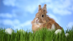 Easter bunny sitting in grass with eggs Stock Footage