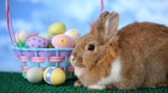 Easter bunny and basket with eggs Stock Footage