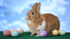 Easter bunny with eggs Stock Footage