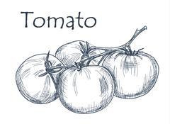 Hand drawn tomato over white background Stock Illustration