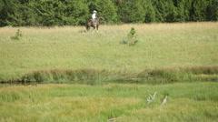 Cowboys herding cows Stock Footage