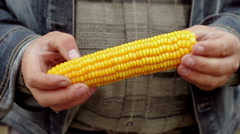 Spadix of sweet corn in the hands of agronomist - stock footage