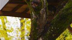 Two young boys in tree house waving - stock footage