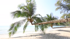 Tropical beach with exotic palm trees . Island Koh Kood, Thailand. Stock Footage