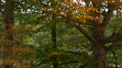 Lake Through the Woods - stock footage