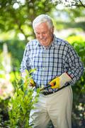 Senior man cutting with pruning shears in garden - stock photo
