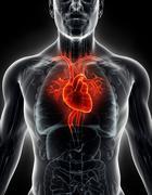 Stock Illustration of 3D illustration Human Internal Organic - Human Heart.
