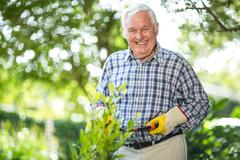 Senior man using pruning shears in garden - stock photo