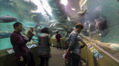 China tourism, people visit underground glass tube Shanghai aquarium Stock Footage