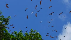 Fruit bats colony Stock Footage