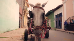 Donkey with cart in Central America - stock footage