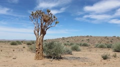 Namibia , Africa - a landscape with sparse vegetation - stock footage