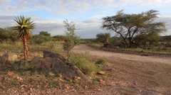 Namibia, Africa - nice varied vegetation, trees, grass and bushes - stock footage