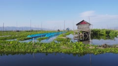 Floating gardens on Inle Lake, Myanmar (Burma) Stock Footage