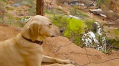 dog sitting near fencing steel mesh, waterfall in background - stock footage