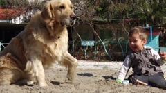 Boy throws sand into dog and it goes away Stock Footage