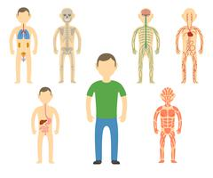Cartoon man body anatomy. Stock Illustration